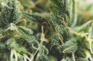 La Camera dei deputati del Messico ha approvato un progetto per la regolamentazione della marijuana: Il Messico legalizza la marijuana